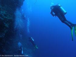 BD-060411-Moalboal-4110952-Homo-sapiens.-Linnaeus.-1758-[Diver].jpg